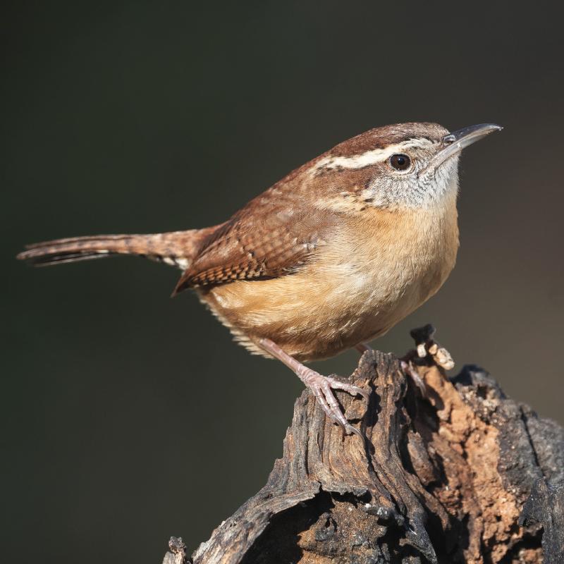 Cora Hartshorn Arboretum And Bird Sanctuary Short Hills